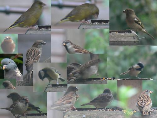 Busy bird-table