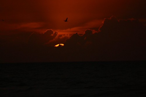 Pelican Sunrise, by LouFCD @ Flickr