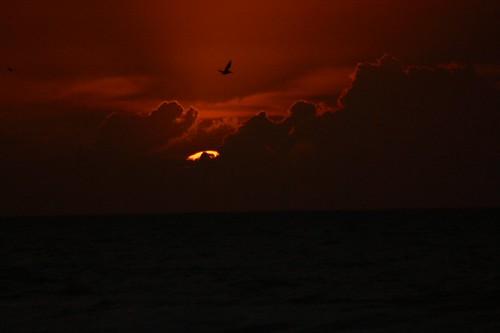 Pelican Sunrise, by LouFCD @ Flickr