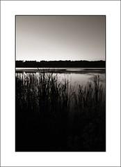 Banner Marsh Sunset 3