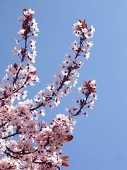 Primavera color de rosa...