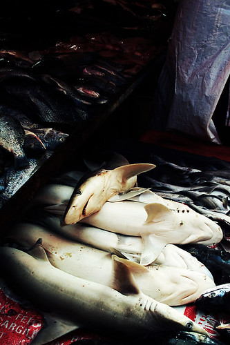 Sharks for sale 550px