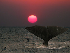 The fluke of a whale as it dives