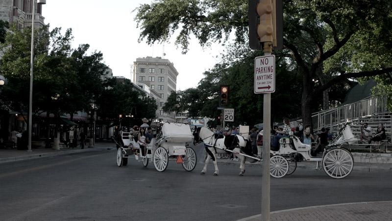 Alamo Horses