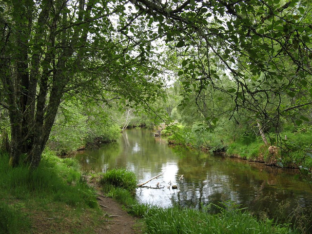 A favourite wee 'corner' of the burn