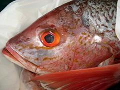 Whole Fresh Fish