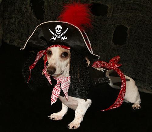 Pirate Levi