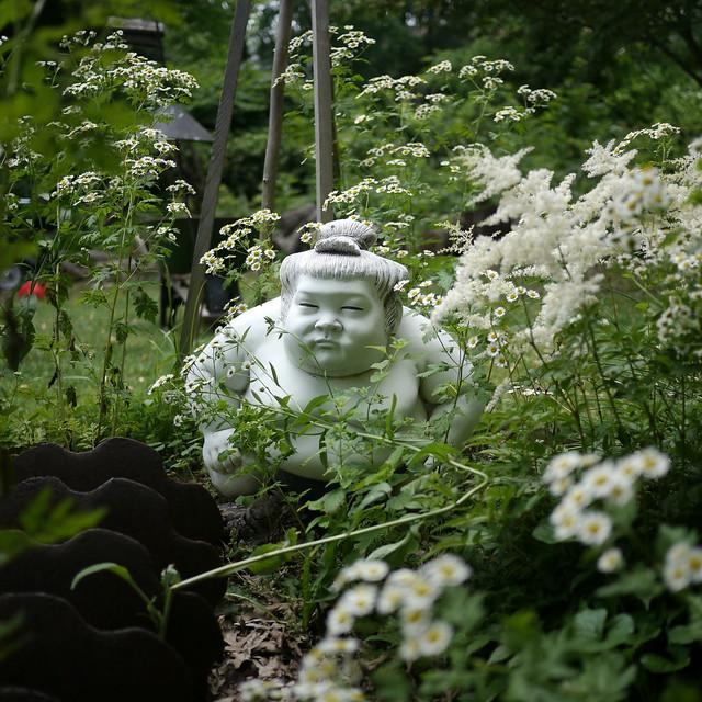 Garden Sumo