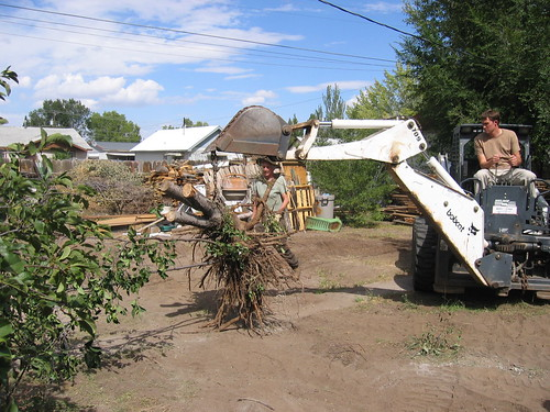 Moving a cherry tree.