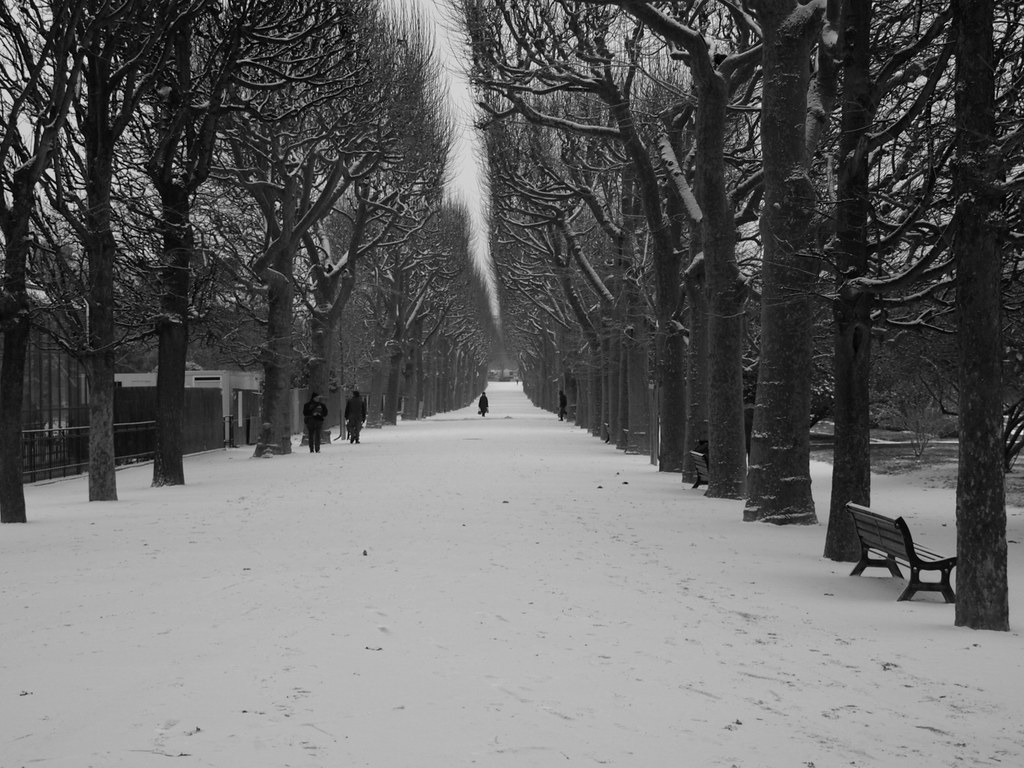 Snow in the Jardin des Plantes