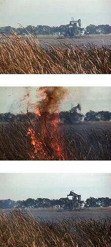 Burning Cattails, Westhope, North Dakota, September 2006