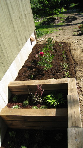 Finished peony bed with step gardens