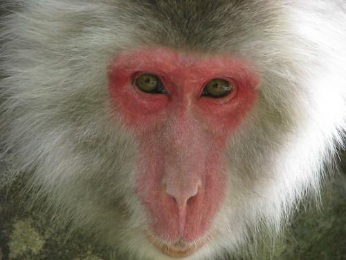 101 - Wise Monkey - 20080618