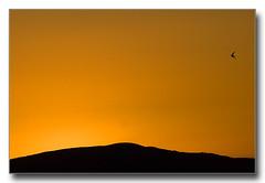 erubicon - Golondrina (Flickr)
