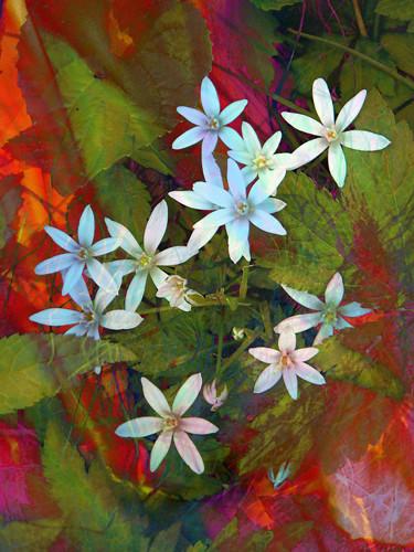 Fire & Flowers