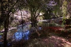 Un río entre la vegetación
