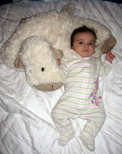 4 Month Sheep Photo