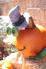 Frog pumpkin