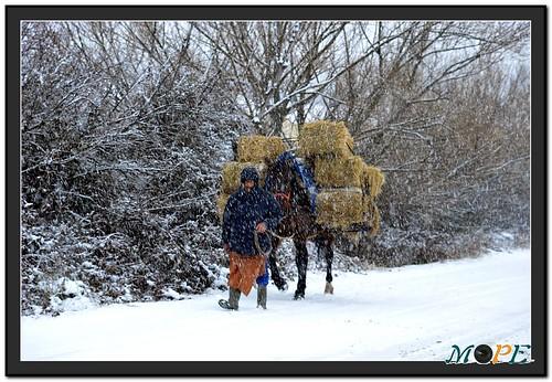 Caminando por la nieve con la comida para los animales. Foto Pedro Merino