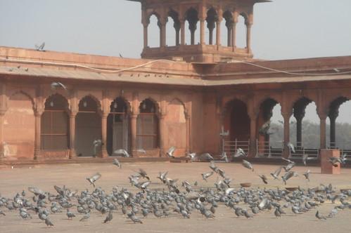 Old Delhi_迦瑪清真寺(Jama Masjid)1-56