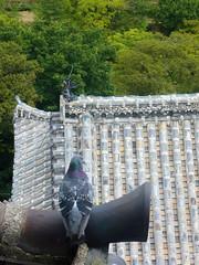 Pigeon on Himeji Castle