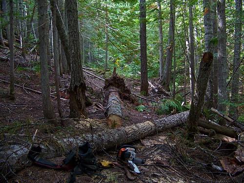 Daisy Creek Trail 604