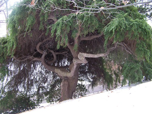 Lakeview Cemetery tree