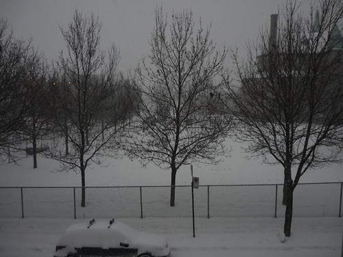 The Lovely Day Out My Window