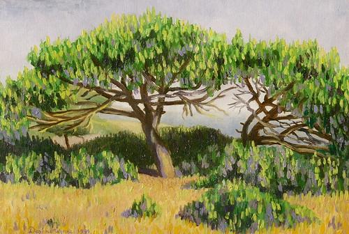 Portuguese Umbrella Trees