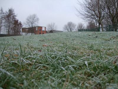 frosty grass.. crunch crunch crunch