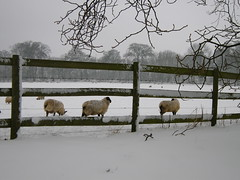 st_albans_winter_213