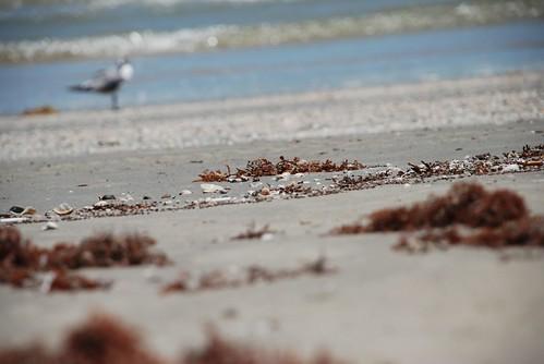 seaweed and shells