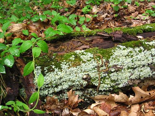 mossy log1