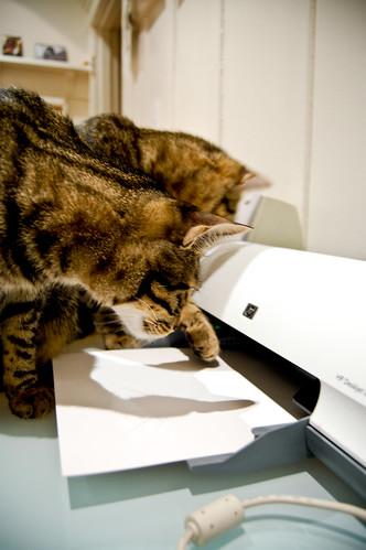 bad cat behavior, ep.1