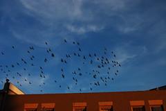 flight of birds no. 4