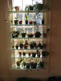 Very cool window shelving for orchids, etc.