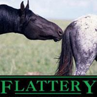 Flattery copy