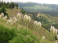 Mt Frosty, 26-27 Jul 2008