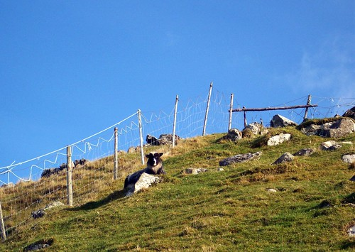 Sheep enjoying a sunny day