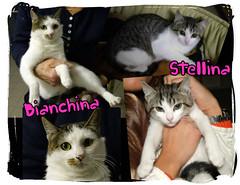 Bianchina e Stellina