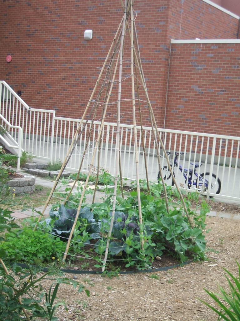 School garden teepee