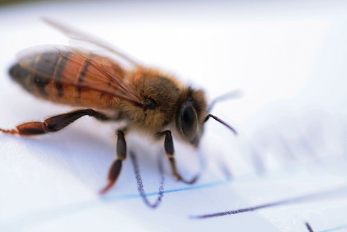 Bee gets buzzzy on my notepad