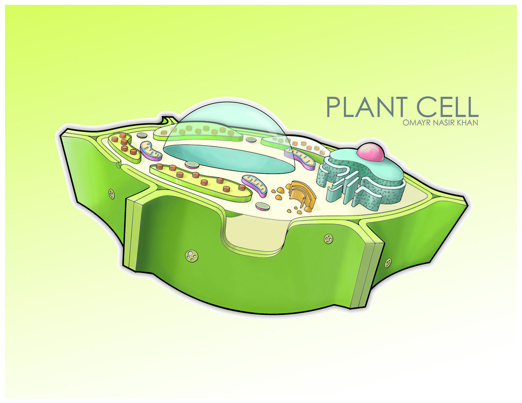 plant cell diagram vacuole 2004 nissan altima fuse box the world 39s best photos of flickr hive mind