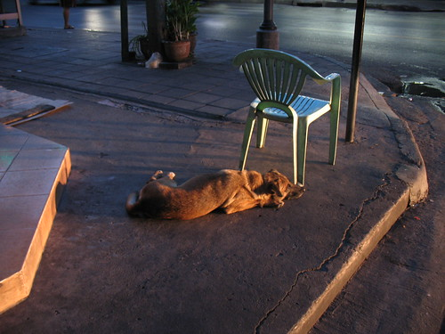 soi dogs at dawn 6:04