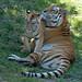 Botanical Gardens and Zoo 099
