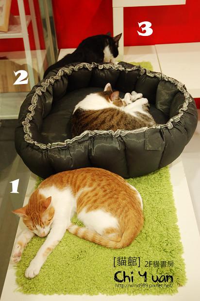 貓書房04.jpg
