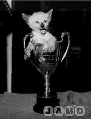 cup-of-mischief