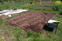 080519-allotment483
