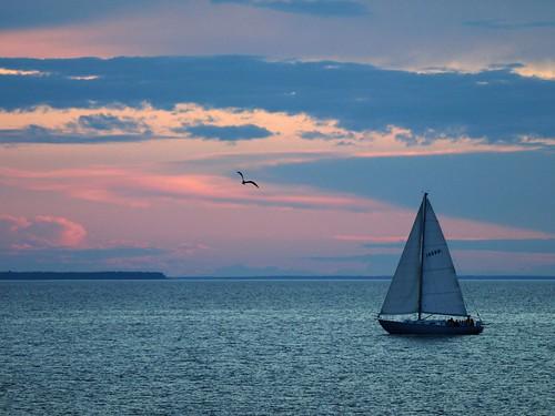Sailboat on Green Gay