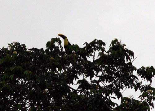 Costa Rica - Día 2 (143)
